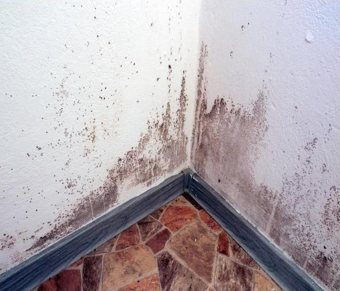 Why Servpro Our Crew Of Specialists Can Help You Understand Mold Damage In Your La Porte